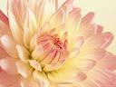 موسوعة رائعة من الورود 27
