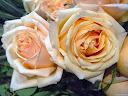 موسوعة رائعة من الورود 37