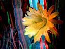 موسوعة رائعة من الورود 40