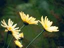 موسوعة رائعة من الورود 43