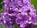 موسوعة رائعة من الورود 53