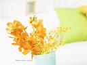 موسوعة رائعة من الورود Sweet-flowers%20%288%29