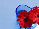 موسوعة رائعة من الورود Flowers-wallpaper%20%2837%29