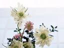 موسوعة رائعة من الورود Flowers-wallpaper%20%289%29
