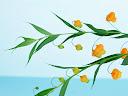 موسوعة رائعة من الورود Flowers-wallpaper%20%2827%29
