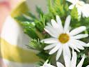 موسوعة رائعة من الورود Flowers-wallpaper%20%2815%29