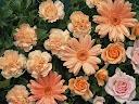 موسوعة رائعة من الورود Pattren%20%288%29