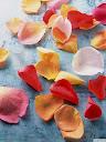 موسوعة رائعة من الورود Pattren%20%2816%29