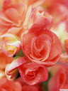 موسوعة رائعة من الورود Pattren%20%283%29