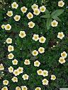موسوعة رائعة من الورود Pattren%20%2828%29