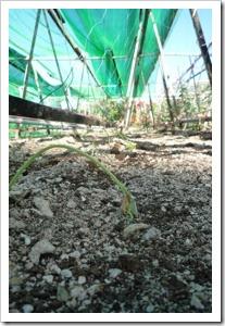 農場乾旱1
