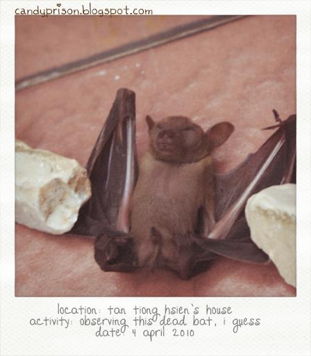 candyprison, tiong hsien, bat