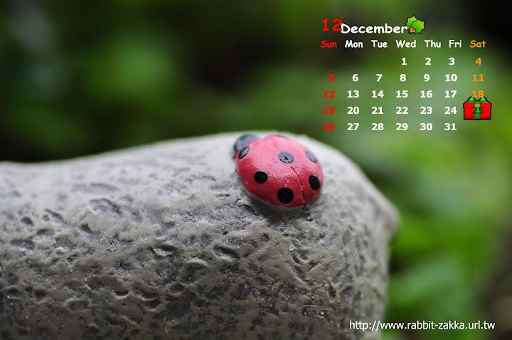 2010-12-ladybug.jpg