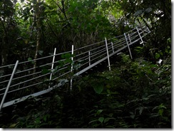 Jungle Stair Master