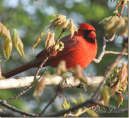 Cardinal4_April14