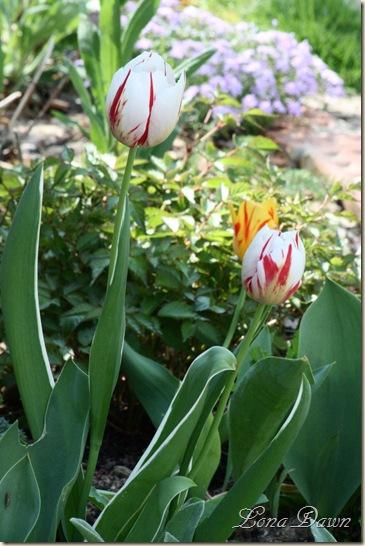 SpringBed_April14