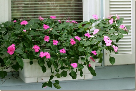 WindowBasket_Impatiens