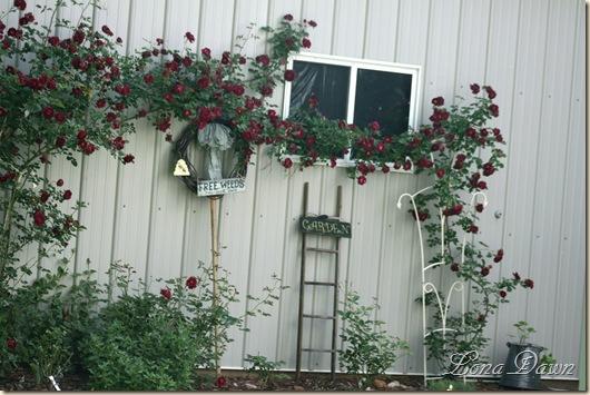 Roses2_May24