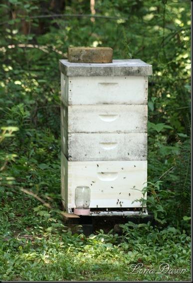WNP_Beehive