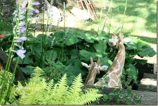 HH_Giraffes_2010