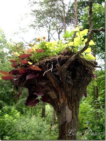 LilyFest_2008_Treestumpb