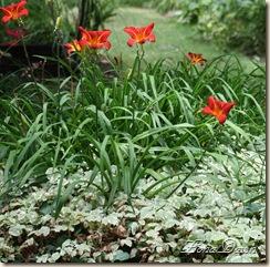 LF_BrightOrange_Lilies