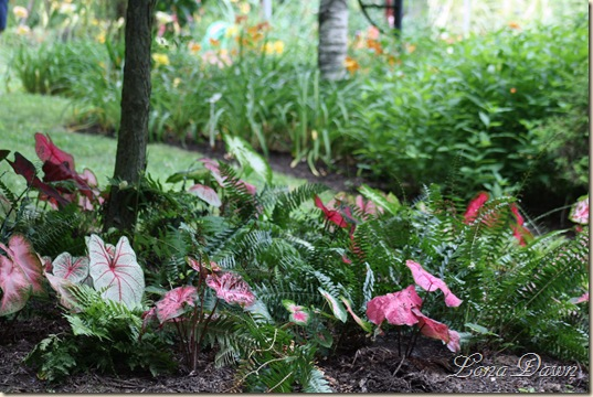 LF_Caladiums_Ferns