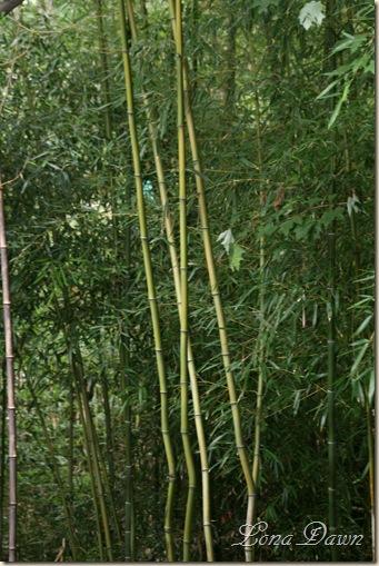 LF_Bamboo