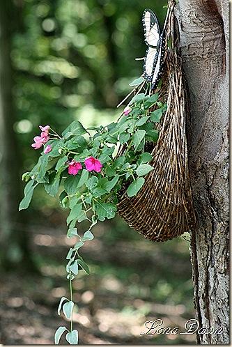HangingBasket_Aug16