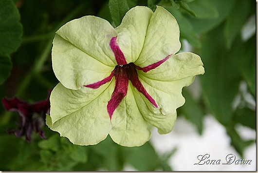 FancyDress_Petunia_Aug9