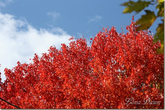 Leaves_Aflame6