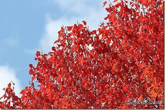 Leaves_Aflame4