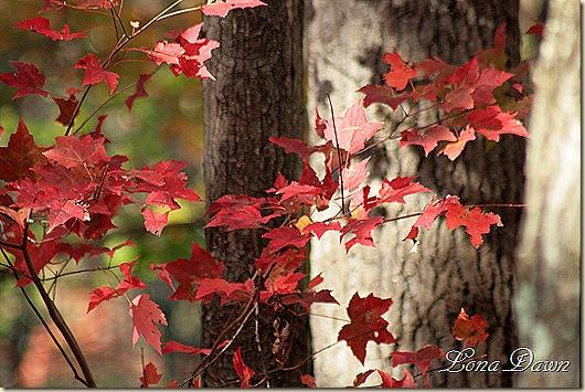 Fall_Mornings4