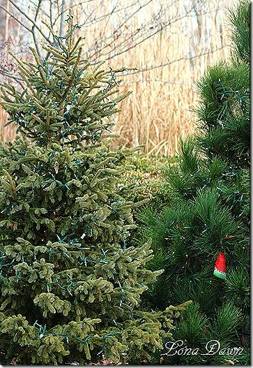 Conservatory_CTrees_Dec2