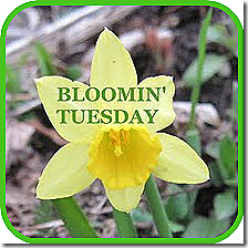 BloominTuesday_button5