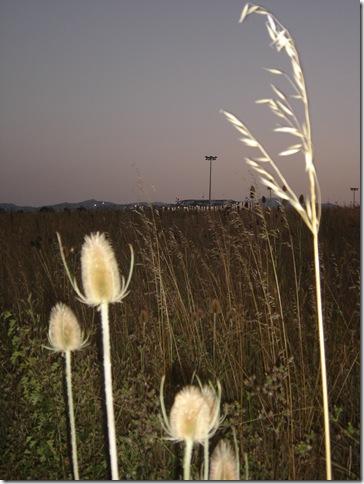 Salburua 2009-07-28 014