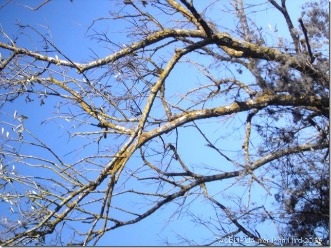 Salburua Nov 2009 006