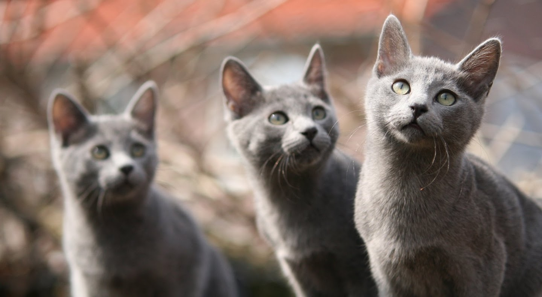 Kittens of Pegusha - Page 3 IMG_4868