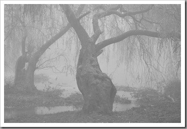 Fat tree in fog