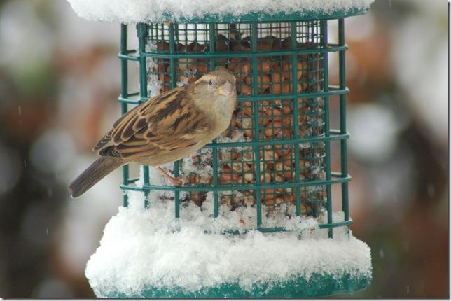 cliveden & norfolk snow 004