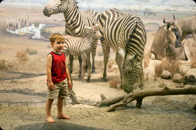 natural history museum miles zebras