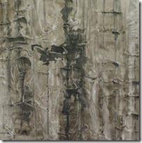 bark study crop 2