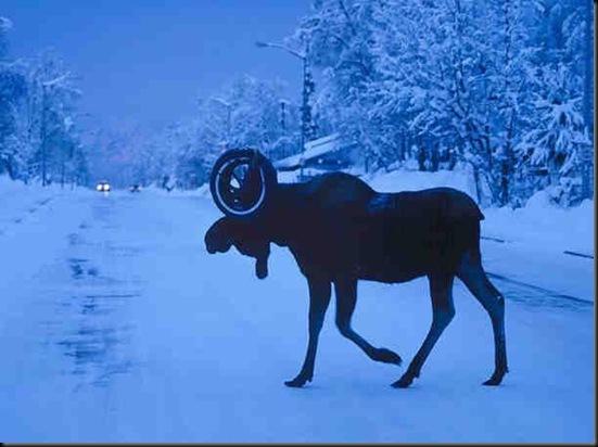 tied moose