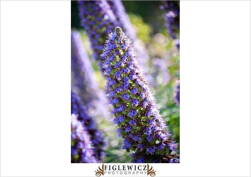Botanic-Garden-Palos-Verde-Hayley-Bryan021.jpg