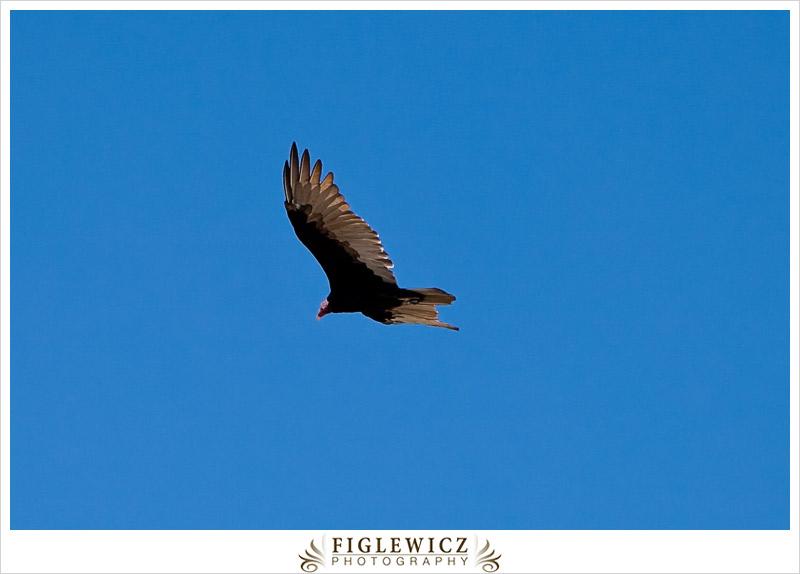 FiglewiczPhotography-AZ-0015.jpg