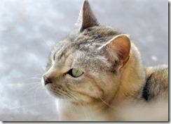 SALLY CAT 2011-02-2