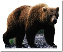 675~Grizzly-Bear-Posters
