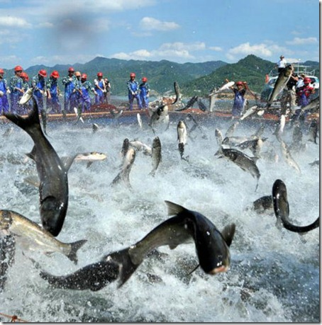 Flying Fish - Amaze Pics (6)