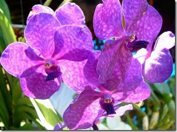 Amazing_Purple_Flowers_9