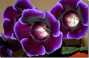Amazing_Purple_Flowers_12